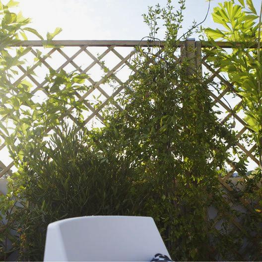 44 Façons De Se Cacher De Vos Voisins Au Jardin Photos Et