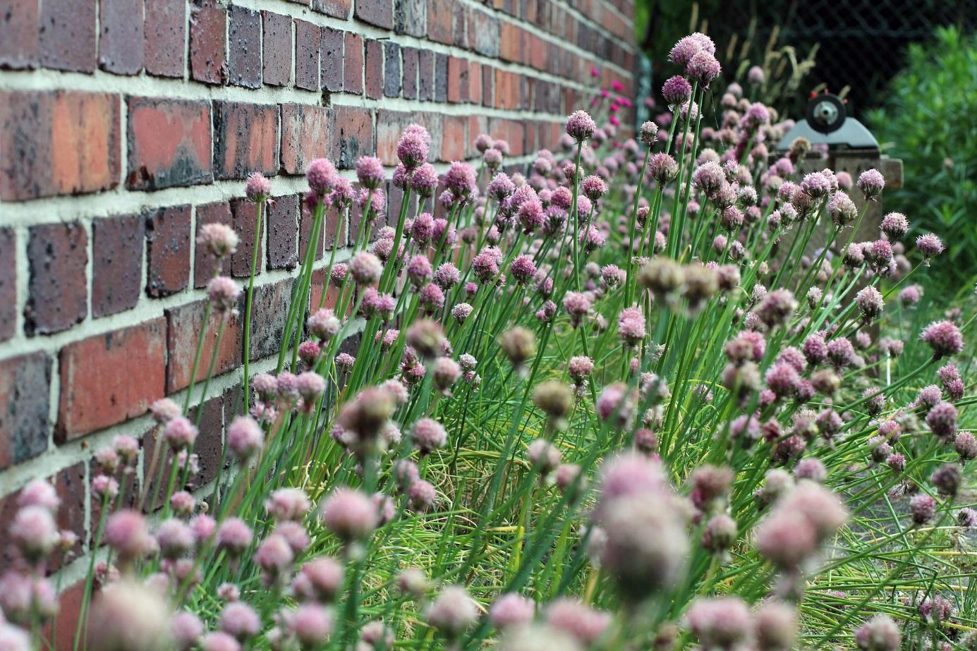 Aménagement Jardin Pas Cher 44 façons de se cacher de vos voisins au jardin (photos et