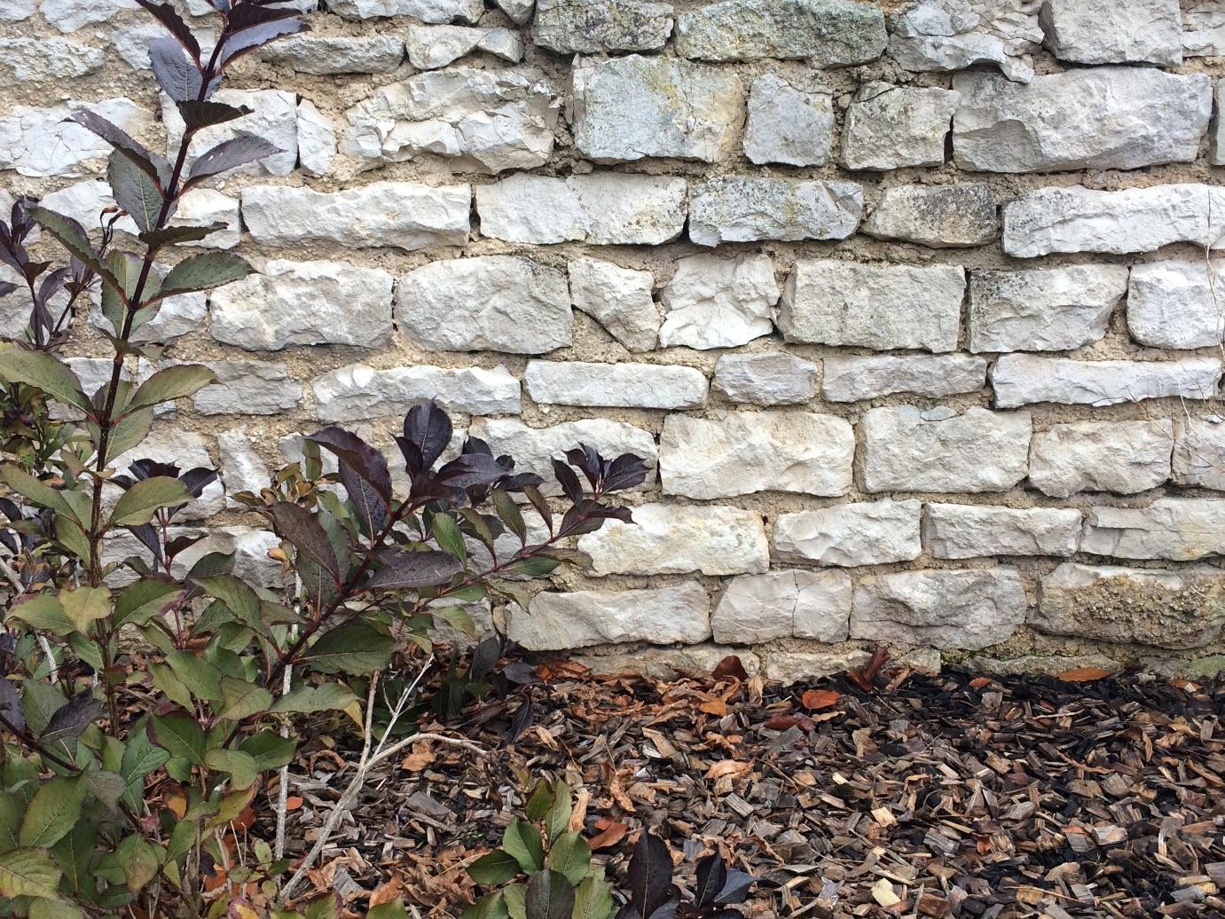 Se Cacher Des Voisins Dans Son Jardin 44 façons de se cacher de vos voisins au jardin (photos et