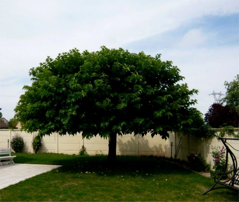 44 fa ons de se cacher de vos voisins au jardin photos et. Black Bedroom Furniture Sets. Home Design Ideas