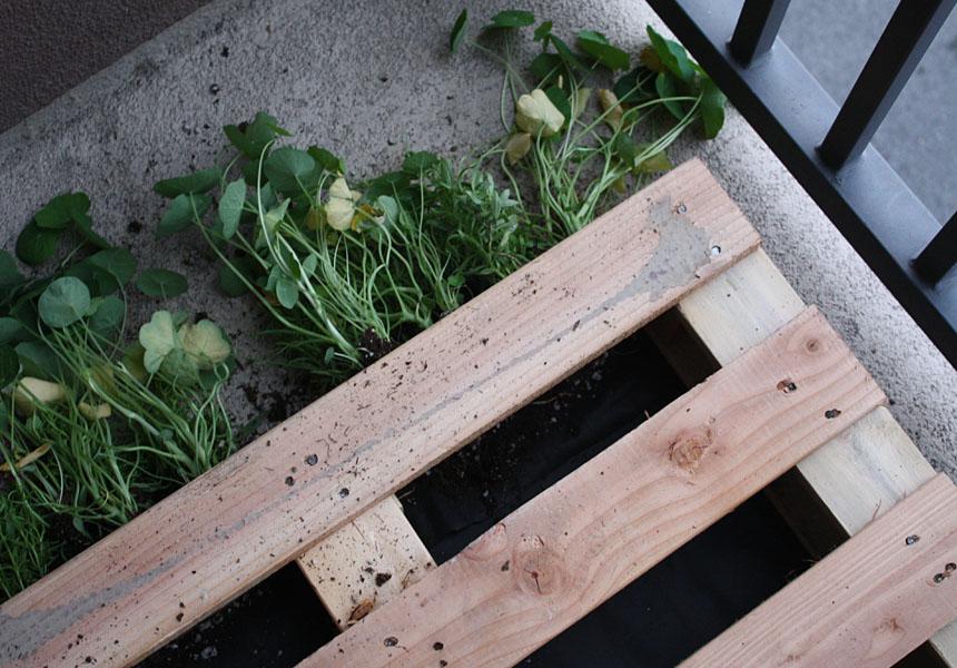 Cr er un jardin ou un mur v g tal partir d 39 une palette - Ou trouver des palette en bois ...