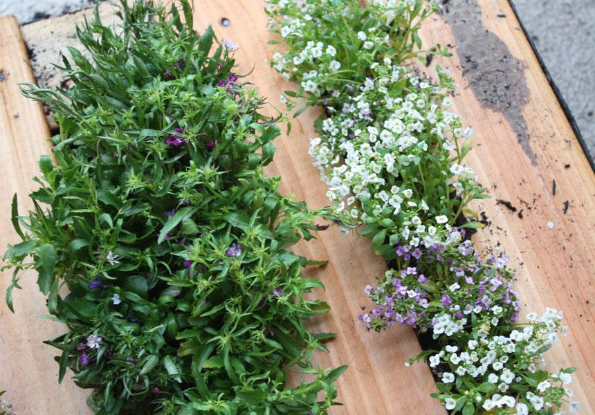 Mur Vegetal En Bois De Palette : Turn Pallets into Vertical Garden