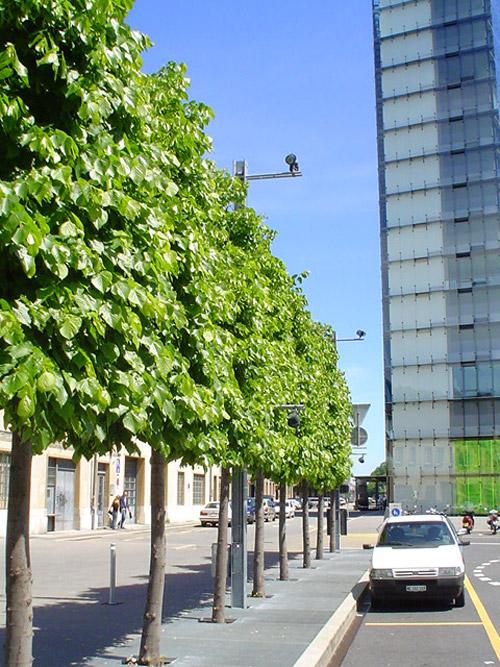 Soyez originaux avec les formes des arbres - Rideau de douche arbre ...