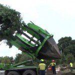 Transplantation d'un arbre - Capture Youtube