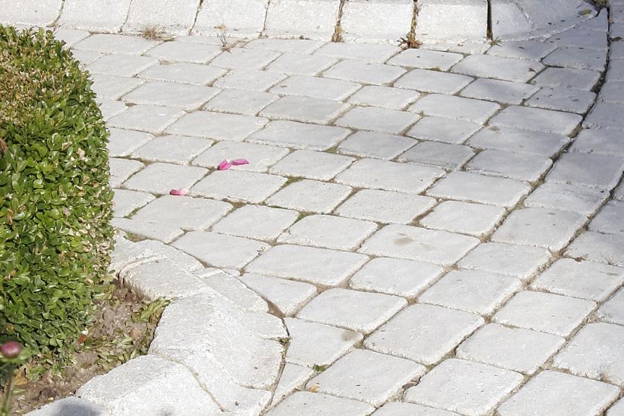 Bordures De Jardin Bien Les Choisir