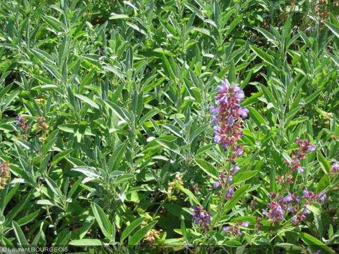 Les 10 plantes aromatiques indispensables votre jardin for Jardin plantes aromatiques