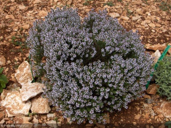 Les 10 Plantes Aromatiques Indispensables A Votre Jardin