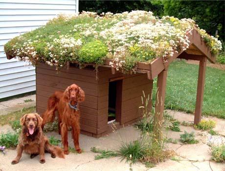 cr er soi m me une toiture v g talis e. Black Bedroom Furniture Sets. Home Design Ideas