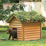Toit végétal sur une niche de chien ©inconnu