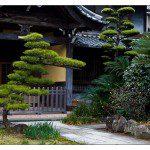 Jardin zen avec pin taillé Niwaki ©YoAndMi- Flickr (Creative Commons)
