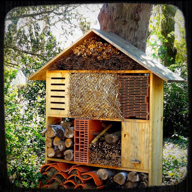 comment construire une maison insectes ventana blog. Black Bedroom Furniture Sets. Home Design Ideas