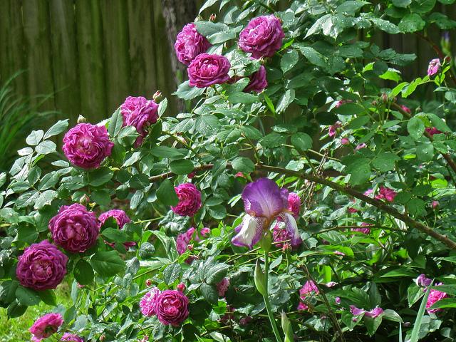 Top 10 des plantes odorantes pour le jardin