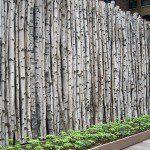 Clôture en troncs de bouleaux ©Tbany.com