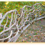 Clôture en branches de bois horizontales ©Tallcloverfarm.com