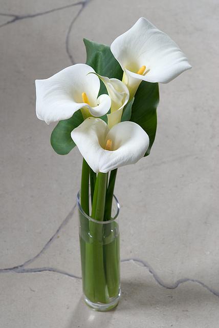 Arum en vase ©JardinoMe-Flickr (Creative Commons)