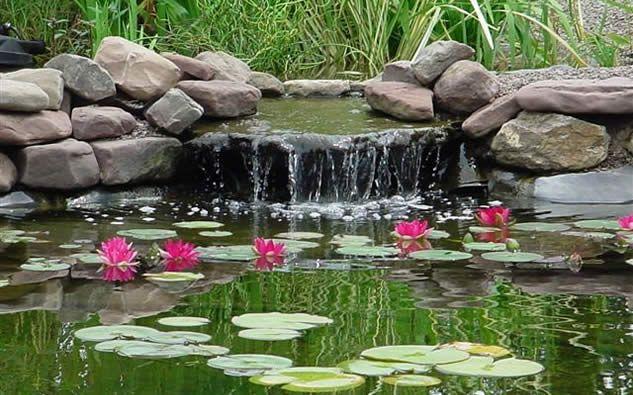 4 styles de bassins copier dans votre jardin for Eau verte bassin exterieur