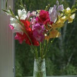 Glaïeul en bouquet ©Vadim Piottukh-Flickr (Creative Commons)