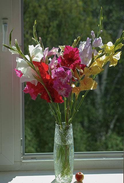 Glaïeul en bouquet ©Vadim Piottukh-Flickr (Creative Commons)