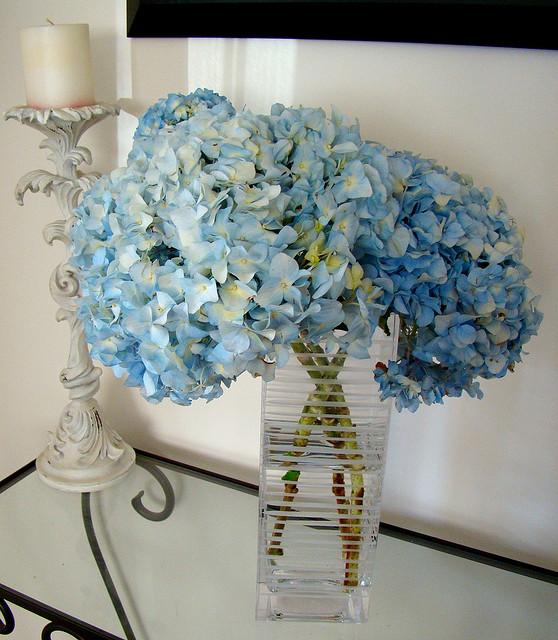 Hortensia en bouquet ©Vmiramontes-Flickr (Creative Commons)