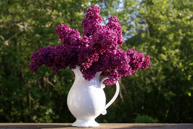 Top 10 des plantes de jardin pour faire des bouquets for Bouquet de fleurs lilas
