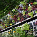 Mur végétal de légumes ©AirGarden
