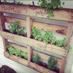 Plantes aromatiques dans une palette ©inconnu
