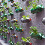 Potager en bouteilles plastiques ©inconnu