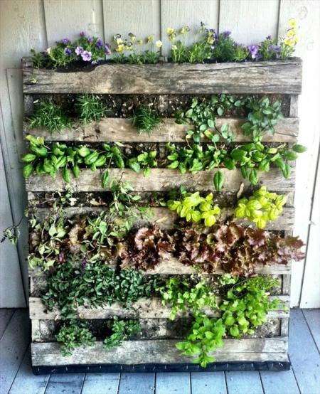 7 id es pour r aliser un potager vertical - Mur vegetal palette ...