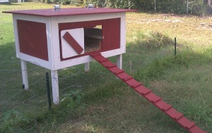 Petit poulailler sans volière ©The Howards/Backyardchickens.com