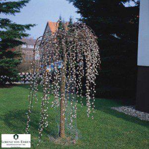 Salix caprea 'Pendula' ©lve-baumschule.de
