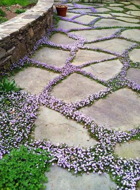 Crer Des Joints Plants Ou Gazon Sur Sa Terrasse Ou Alle