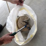Casse du globe en verre qui sert de moule ©Thegardenglove.com