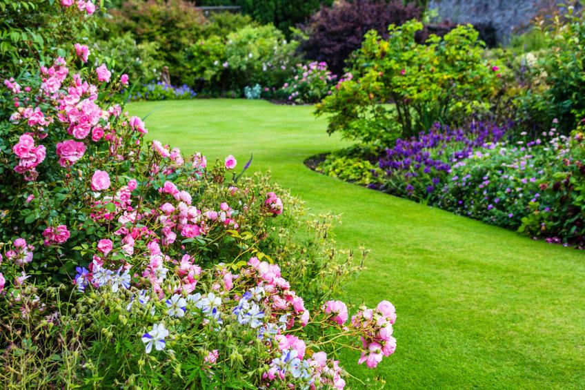 Comment choisir les bonnes plantes pour votre jardin ?